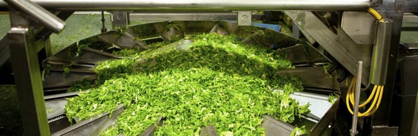 lettuce-860x280